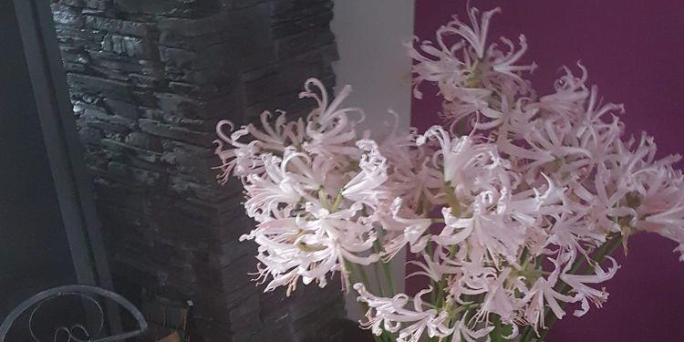 Das Team von Das Blumenmädchen