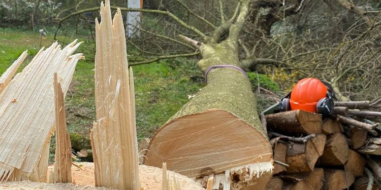 Das Team von Forstservice | Brennholzverkauf Denny Hopfer