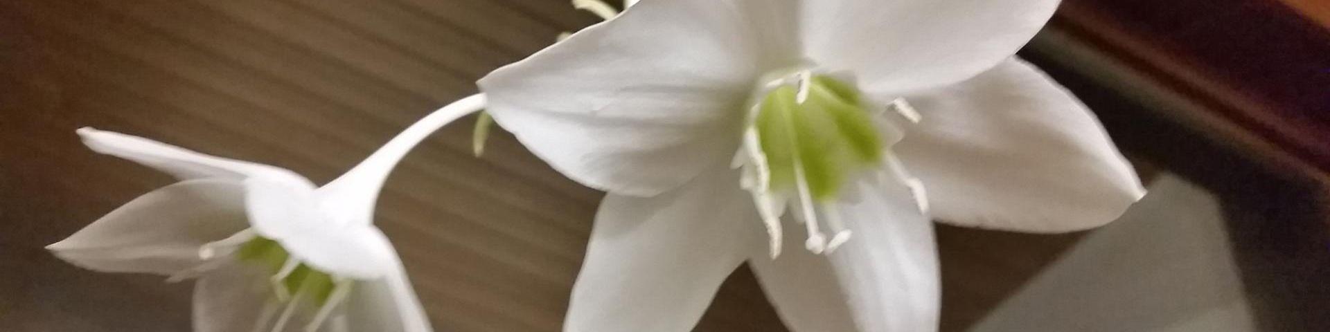 Titelbild von Blumen Eppinger