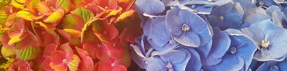 Titelbild von Das Blumenmädchen
