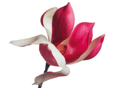 Beschreibungsbild zu Blütenzauber